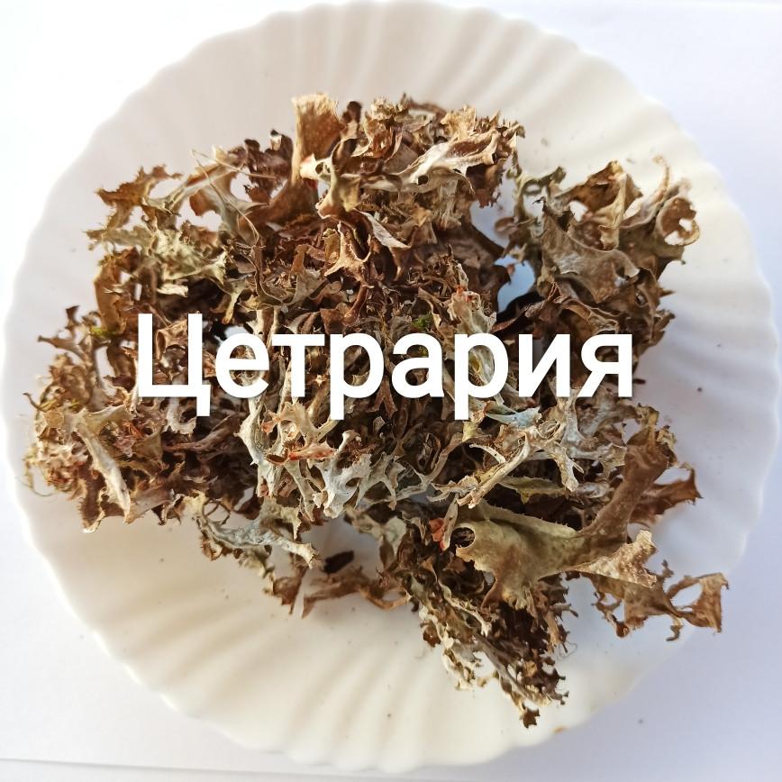 Исландский мох (цетрарий)